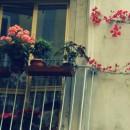Napoli Citt'Attiva. Idee di cittadinanza